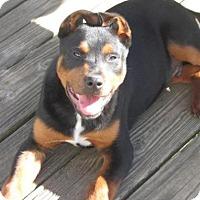 Adopt A Pet :: Salvatore - Rocky Mount, NC