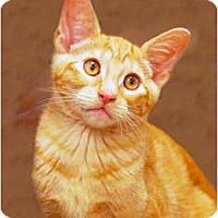 Adopt A Pet :: Missy - Encinitas, CA