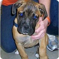 Adopt A Pet :: Liliana - Richmond, VA