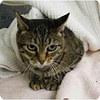 Adopt A Pet :: Lemmie - Modesto, CA