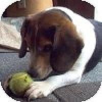 Adopt A Pet :: Samuel - Novi, MI