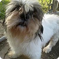 Adopt A Pet :: Edwin - Cumberland, MD