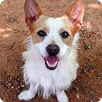 Adopt A Pet :: Doogan - hartford, CT