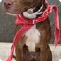 Adopt A Pet :: Tressie - Greenville, SC