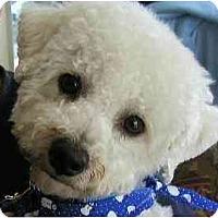 Adopt A Pet :: Max - La Costa, CA
