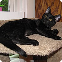 Adopt A Pet :: Noah - Harrisburg, NC
