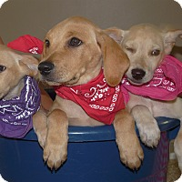 Adopt A Pet :: Gracie, Sara & brother Clayton - Marlton, NJ