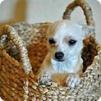 Adopt A Pet :: Pablo - Austin, TX