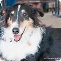 Adopt A Pet :: Ruby - Pueblo West, CO