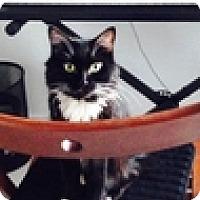 Adopt A Pet :: Keifer - Vancouver, BC