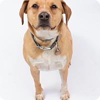 Adopt A Pet :: Dillon - Santa Barbara, CA