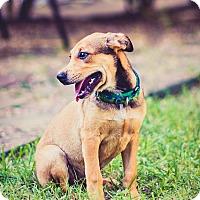 Adopt A Pet :: Justice - Austin, TX