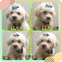 Adopt A Pet :: Heidi - South Gate, CA