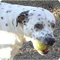 Adopt A Pet :: Dino - Canoga Park, CA