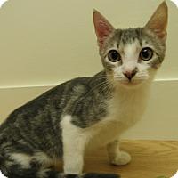 Adopt A Pet :: Ula - Milwaukee, WI