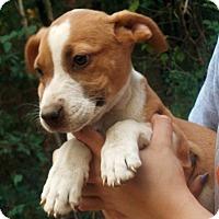 Adopt A Pet :: Leoni - Pewaukee, WI