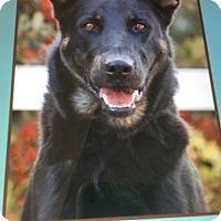 Adopt A Pet :: HANFORD VON HANSI - Los Angeles, CA