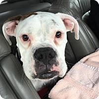 Adopt A Pet :: Maggie - Woodinville, WA