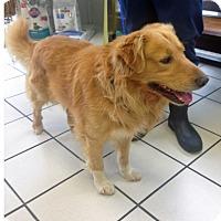 Adopt A Pet :: Max V - BIRMINGHAM, AL