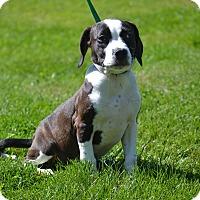 Adopt A Pet :: Trixie - Lake Odessa, MI