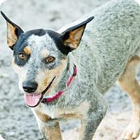 Adopt A Pet :: Mabel - Bradenton, FL