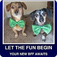 Adopt A Pet :: Cesar & Deuce - Morrisville, PA