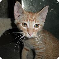 Adopt A Pet :: Mears - Milwaukee, WI