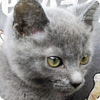 Adopt A Pet :: Gerry - Germantown, MD