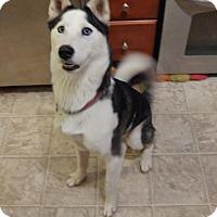 Adopt A Pet :: Xena - Mount Juliet, TN