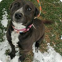 Adopt A Pet :: Cleo - Fruit Heights, UT