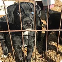 Adopt A Pet :: Sam - Sagaponack, NY