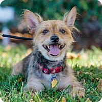Adopt A Pet :: Taylor D4110 - Fremont, CA