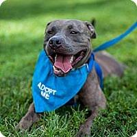 Adopt A Pet :: Artie - Hollywood, FL