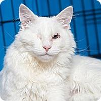 Adopt A Pet :: Braille - Gaithersburg, MD