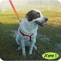 Adopt A Pet :: Neva I (Carmen I) - Graceville, FL