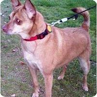 Adopt A Pet :: Kandi - Gilbert, AZ