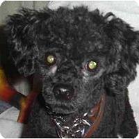 Adopt A Pet :: Eddie - Rigaud, QC