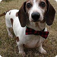 Adopt A Pet :: Bobby - Baton Rouge, LA