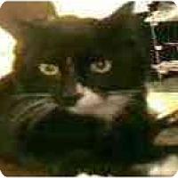 Adopt A Pet :: Boots - Arlington, VA