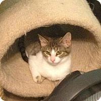 Adopt A Pet :: Ada Lou - Richfield, OH