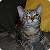 Adopt A Pet :: Kiwi - In Foster Care - Milwaukee, WI
