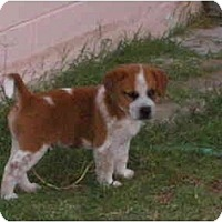 Adopt A Pet :: Clancy - Phoenix, AZ