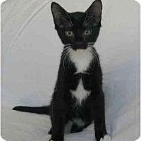 Adopt A Pet :: Tux - Oakland Park, FL
