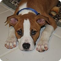Adopt A Pet :: Sherman - Homewood, AL