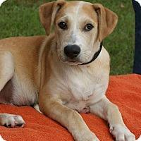 Adopt A Pet :: Ayden - Randolph, NJ