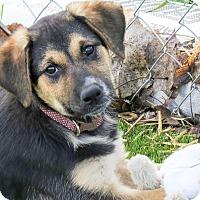 Adopt A Pet :: Sage - Meridian, ID