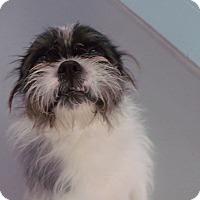Adopt A Pet :: Oliver - Muskegon, MI