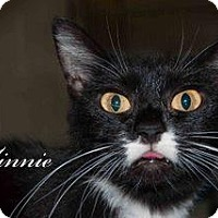Adopt A Pet :: Minnie - Middleburg, FL