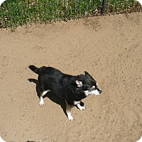 Adopt A Pet :: Teddy Bear - Wisconsin Dells, WI