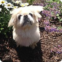 Adopt A Pet :: Peanut - Fennville, MI